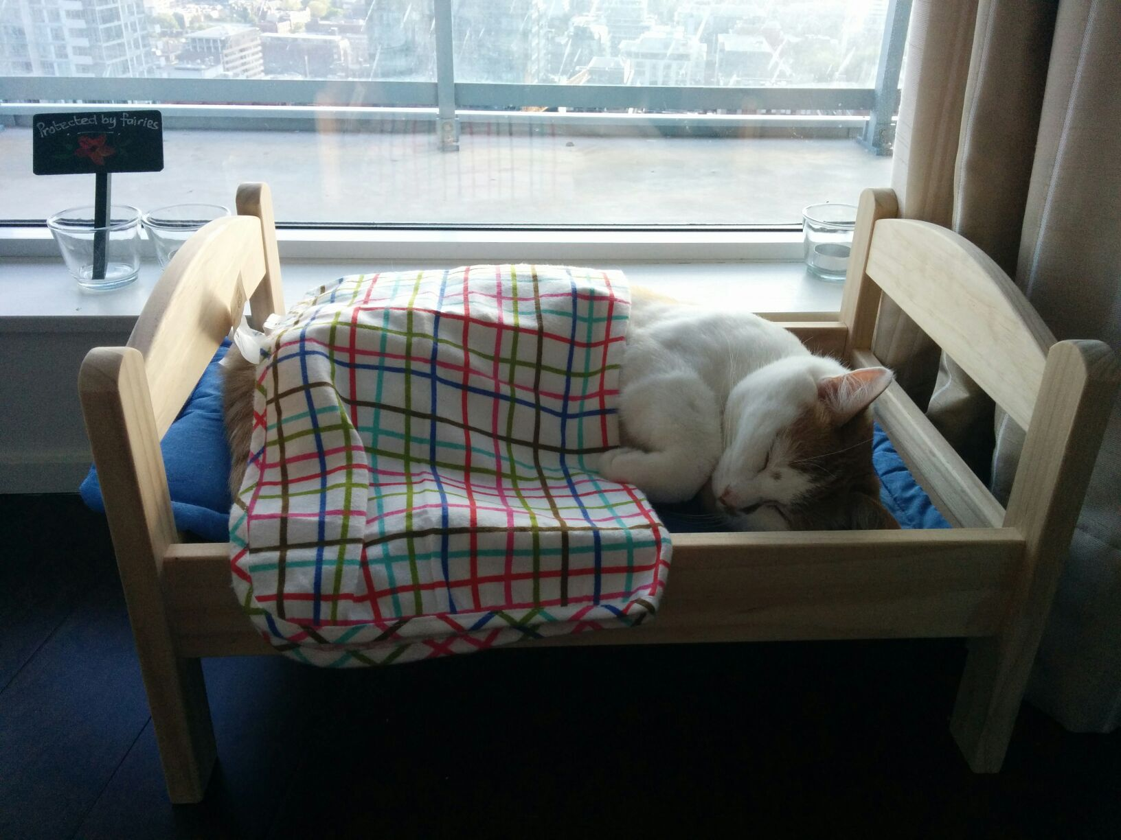 top 10 best cat beds that will make you go i must have