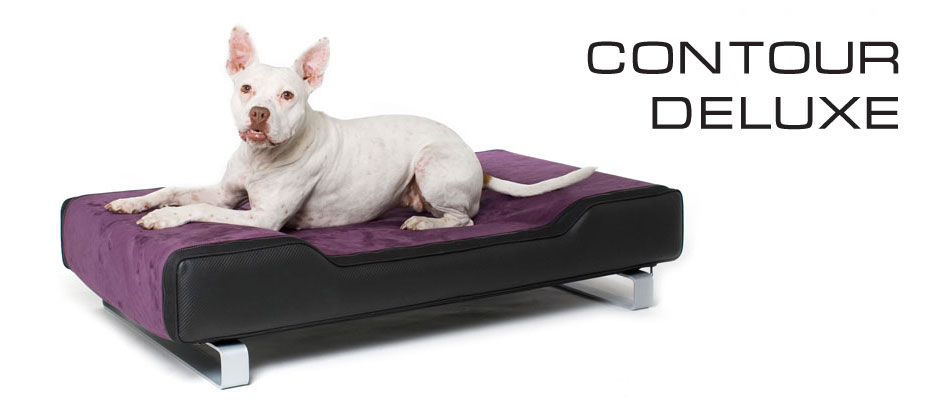 off the floor dog beds