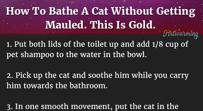 how to give your cat a bath without getting scratched
